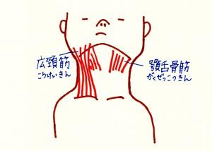 あごの筋肉